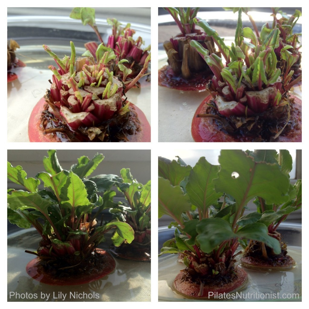 Grow Beet Greens at Home (no green thumb needed) - Pilates ...