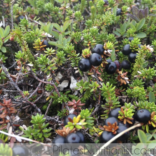 crowberries Alaska