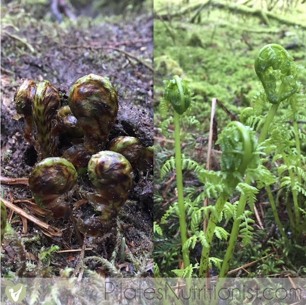 fiddleheads in Alaska